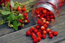Польза ягод земляники при шизофрении