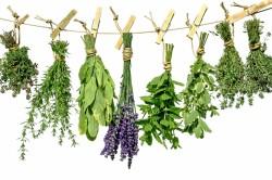Польза успокоительных трав при неврозе