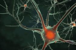 Истощение нервной системы - причина невроза